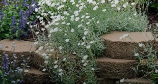 18 Beautiful Plants That Will Thrive in Rock Gardens