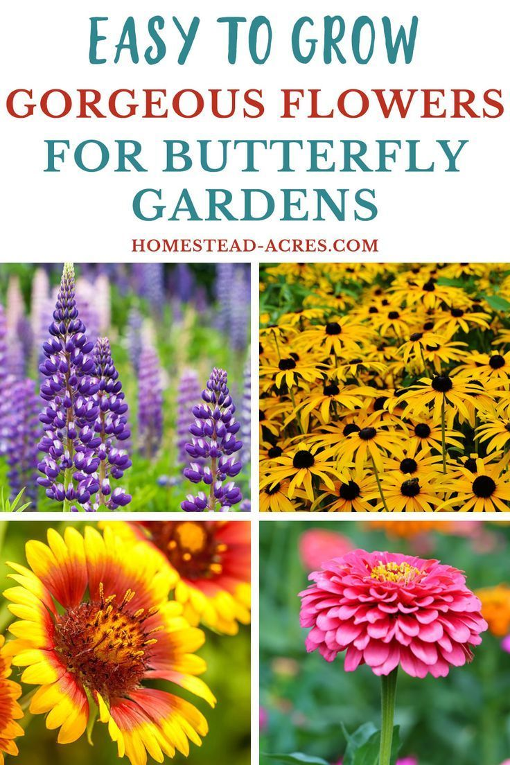 19 Best Flowers For Butterfly Gardens - Homestead Acres