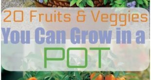 20 fruits and vegetables that can be grown in pots |,  #diygardeneasy #Fruits #grown #pots #v...