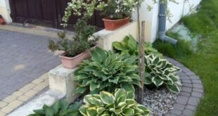 40+ Awesome Small Front Garden Design Waterfall Best Ideas