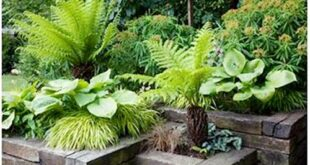 42 Beautiful Garden Bed Edging Ideas With Pictures