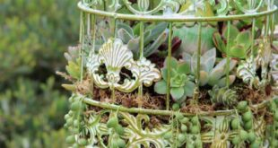 47 fabulous Succulent Planting Ideas with DIY tutorials YOU must Look at