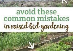 7 Common Mistakes in Raised Bed Gardening | health