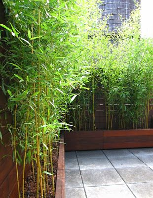 Befores and Afters: New York Roof Garden