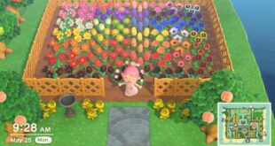 Finally finished my rainbow garden of hybrids! That blue rose was going to be the death of me. ??