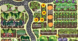 How Much to Plant Per Person in the Vegetable Garden for a Year's Worth of Food