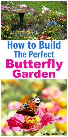 How to Build a Butterfly Garden- A Cultivated Nest