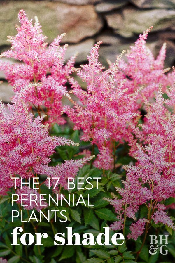 Our 17 Favorite Perennials That Thrive in Shady Gardens
