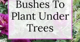 Shade Loving Shrubs: 11 Beautiful Bushes To Plant Under Trees - Gardening @ From House To Hom...